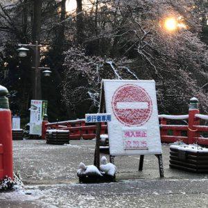 おはようございます。今朝起きたら、なんと雪化粧してました。4月の雪は13年ぶりです(富山市では)ー 場所: 高岡古城公園