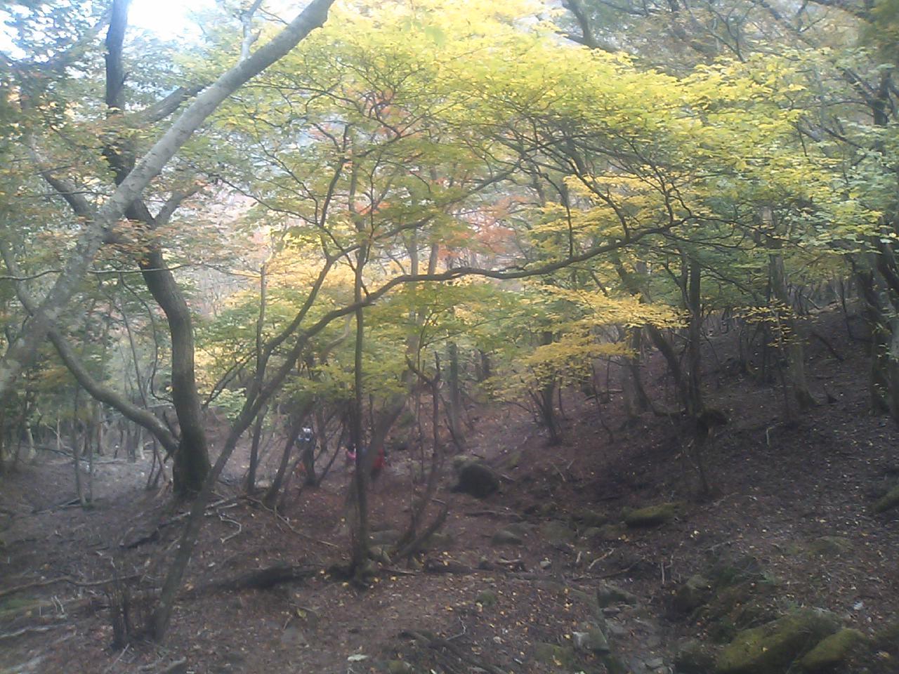 愛知川渓谷